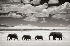 Google Image Result for http://www.borrowlenses.com/blog/wp-content/uploads/2012/06/AndyBiggs_TA01_ElephantsClouds.jpeg