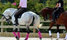 Goodness, look at that pink on grey. I love grey horses! Pity the horse is bent so uncomfortably behind the verticle! Dressage, Equestrian Outfits, Equestrian Fashion, Grey Horses, Horse Accessories, All About Horses, Horse Barns, Horse Pictures, Equine Photography