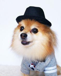22919bd2 HANDMADE dog hats, dog caps, summer hat, cowboy hat, sun visor hat, sun hat,  pet accessories, dog hoodies, dog outfit