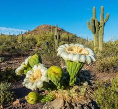 Photo from Desert Botanical Garden in Phoenix, Arizona