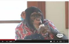 Take Action Tuesday: Urban Tarzan  http://www.chimpsanctuarynw.org/blog/2013/04/take-action-tuesday-urban-tarzan/?fb_action_ids=4682084533130_action_types=og.likes_source=other_multiline_object_map=%7B%224682084533130%22%3A143001649212185%7D_type_map=%7B%224682084533130%22%3A%22og.likes%22%7D_ref_map=%5B%5D