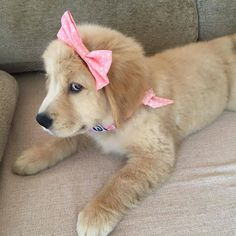 Astonishing Everything You Ever Wanted to Know about Golden Retrievers Ideas. Glorious Everything You Ever Wanted to Know about Golden Retrievers Ideas. Golden Retrievers, Dogs Golden Retriever, Cute Dogs And Puppies, I Love Dogs, Doggies, Dog Pictures, Animal Pictures, Animals Images, Retriever Puppy