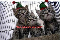 Website_Christmas_Kittens