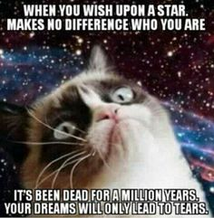 18 Times Grumpy Cat Said Exactly What He Thinks Of Stupid People - Funny Cat Quotes Grumpy Cat Quotes, Grumpy Cat Humor, Grumpy Cats, Cats Humor, Cats Meowing, Memes Humor, Cat Memes, Cute Cats, Funny Cats