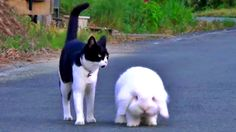 This Chubby Bunny And His Feline Friend Are Too Cute For Words! Watch Their Adorable Interaction