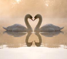 20 Magnifiques photos d'animaux qui s'embrassent, le temps des amours | Buzzly
