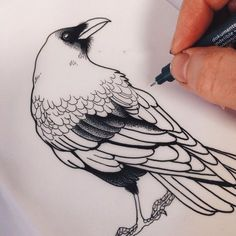 """(Open w/ Poe) """"Come on now Edgar, stay stil, I& almost done."""" I say softly . Crows Drawing, Bird Drawings, Tattoo Drawings, Drawing Sketches, Crow Art, Bird Art, Fuchs Illustration, Raven Bird, Vegan Tattoo"""