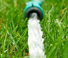 Lawn and Garden Care In The Heat and Drought