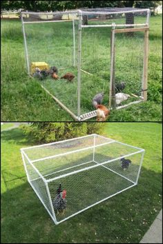 Start raising chickens by building a lightweight and low-maintenance PVC chicken tractor!