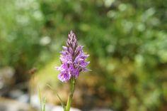 belle fleur solitaire