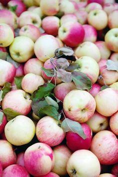 Blen Harvest 2013