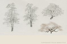 Drawing of trees in the Boston Public Garden.  #Felix Doolittle www.fdsketches.com