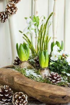 Spring greetings in winter - Diy Winter Deko Ikebana, Spring Decoration, Spring Bulbs, Deco Floral, Spring Home, My New Room, Indoor Garden, Seasonal Decor, Planting Flowers