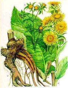 Medicinal Herbs, Kraut, Herbal Medicine, Textile Art, Cactus Plants, Weed, Herbalism, Health, Nature