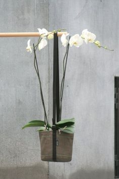 Pot suspendu avec orchidée - Bacsac