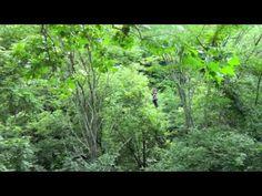 Hocking Hills Zipline Canopy Tours
