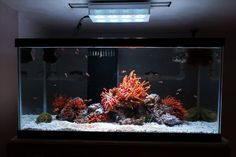 See more in the All Things Aquaria board: https://www.pinterest.com/JibinAbraham/all-things-aquaria/  Dukester's Clownfish and Anemone Only tank - Reef Central Online Community