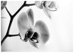 Black and white flower print flower by IonAnthosPhotography