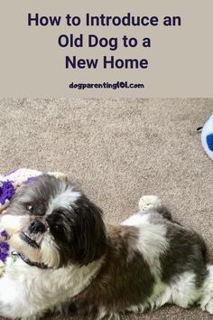 Congratulations on saving the life of an old dog. You're a star!! Here's how to introduce him to his new forever home. #adoptaseniordog #adoptdontshop #olddogsarethebestdogs Dog Care Tips, Pet Care, Welcome Home Parties, Family Outing, Parenting 101, Old Dogs, Dog Owners, Rescue Dogs, Your Dog