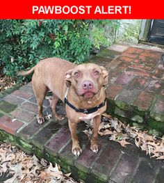 Is this your lost pet? Found in Memphis, TN 38104. Please spread the word so we can find the owner!    Nearest Address: Near Madison Avenue, Memphis, TN, United States