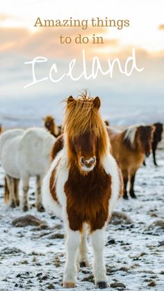 If you travel to Iceland you are going to want this huge list of things to do in Iceland to inspire you. This truly is the Ultimate Iceland Bucket List PLUS off the beaten path alternatives in the summer, winter, fall, and spring.
