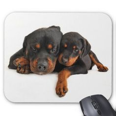 #Rottweiler Brown & Black Puppy Dog Love Mouse Pad - #rottweiler #puppy #rottweilers #dog #dogs #pet #pets #cute
