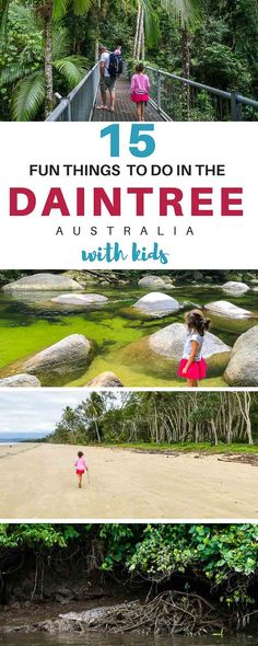 Daintree Tours - Thi