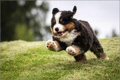 Cute little puppy jumping