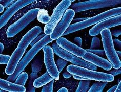 Researchers Re-Engineer E-Coli DNA to Make it Programmable  A team of synthetic biologists led by Farren Isaacs at Yale University [has take...
