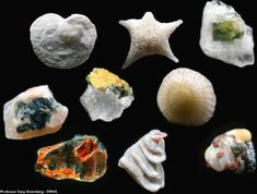 Sand grains magnified 250 times. Every grain of sand in the world is unique when viewed through a microscope.