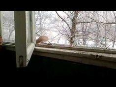 Белочка на балконе - YouTube