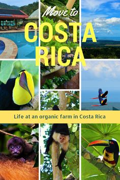 MOVE TO COSTA RICA!  Ever wanted to sell it all and move to a remote, organic farm in the jungle of Costa Rica? We did and you should. Read about our experience.