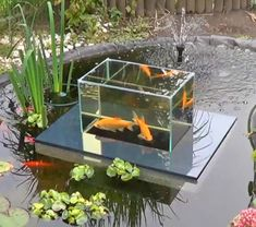 nice Floating Fish Koi Pond Observatory Lets You View Your Fish Above The Water Line by http://www.dezdemon-exoticfish.space/fish-ponds/floating-fish-koi-pond-observatory-lets-you-view-your-fish-above-the-water-line/