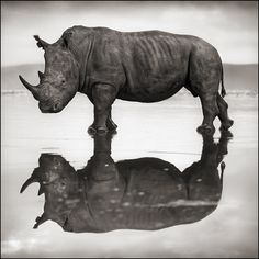 ...I hold only love and respect for the rhino!  Conserving Africa's Wildlife Through Photography