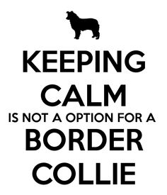 Hahahahaha...NOPE! :) #bordercollie