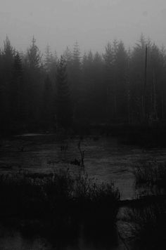 Dark forest, glow of the lake, an eternal dance of death Gray Aesthetic, Book Aesthetic, Magical Forest, Dark Forest, Blue Wallpaper Iphone, Grey Wallpaper, Black And White Clouds, Dark & Stormy, Dark Landscape