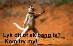 . Witty Quotes Humor, Funny Qoutes, Cute Quotes, Afrikaanse Quotes, Funny Animal Pictures, True Words, Jokes, Inspirational Quotes, Lol