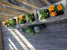 Our small herb garden on the deck.