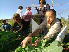 Article ~ The Edible Schoolyard: Seed-to-Table Learning with a 7 minute video worth watching.  Hooray for schoolyard gardens and connecting kids of all ages to real, tasty, nutritious and fun to grow/raise food!