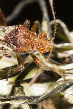 mountain bug in the grass. Taken Near Amay AO Italy.
