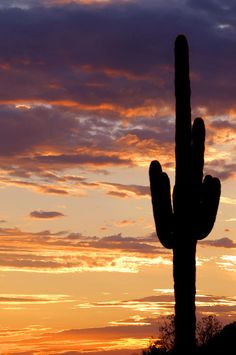 ✮ A silhouette of a mighty saguaro cactus in the Arizona Sanoran Desert at sunset