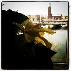 View from the restaurant at the swedish parliament.We are looking att Stockholm city hall.