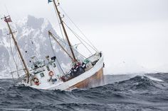 VM sea-fishing Lofoten Svolvær, foto Eric Fokke