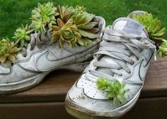 Turn your old sneakers into planters