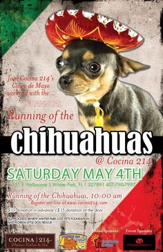 Running of the Chihauhaus is May 4  http://www.orlandocanineconnections.com/running-of-the-chihauhaus-may-4/