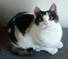 【07年07月うちの猫】:猫達へ…:So-netブログ