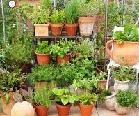 Bylinky v květináči do bytu, na balkon nebo terasu