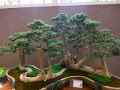 Have you ever seen something so creative?  I am a Bonsai fancier...and this is thrilling.  The container...custom-made?