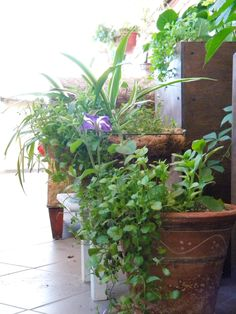 My Containers garden  in Moscow
