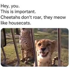 Funny Animal Jokes, Cute Funny Animals, Funny Dogs, Funny Llama, Funny Animal Sayings, Clean Animal Memes, Stupid Animals, Animals Doing Funny Things, Funny Animals With Captions